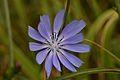 Araignées, insectes et fleurs de la forêt de Moulière (Les Chirons Noirs) (29043928875).jpg