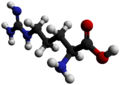 Arginine-3D-balls-by-AHRLS-2012.png