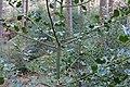 Around Eulenstein 2020-03-14 02.jpg