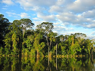 Morpho - Atlantic Forest in Paraguay