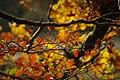 Autumn Branches (62599499).jpeg
