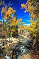 Autumn colours in SW Utah - spectacular colours along Huntington Creek on Hwy 31, Utah (15630237506).jpg