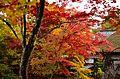 Autumn foliage 2012 (8253625262).jpg