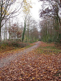 Autumn in Bacton Wood - geograph.org.uk - 1051725