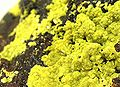 Autunite-Quartz-bb27b.jpg