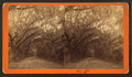 Avenue in Bonaventure, from Robert N. Dennis collection of stereoscopic views 4.png
