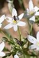 Baby grasshoppers (8431704925).jpg