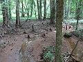 Battle Creek Cypress Swamp 35.jpg