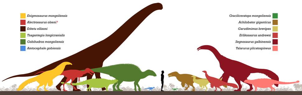 Bayan Shireh Formation Fauna