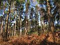 Bedgebury Forest.jpg