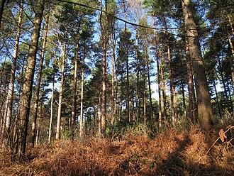Bedgebury Forest - Image: Bedgebury Forest