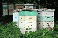 Beehive/