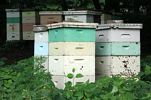 Beehive - Painted wooden beehives with active honey bees