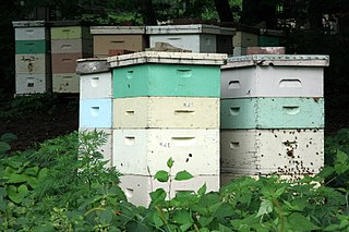 Beehive enclosed structure in which honey bees live and raise their young