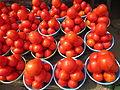 Belles tomates.JPG
