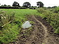 Benkid77 Puddington-Shotwick footpath 38 110809.JPG