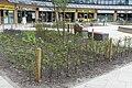 Beplanting P1390107.jpg