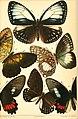 Berliner entomologische Zeitschrift (1888) (20366933525).jpg
