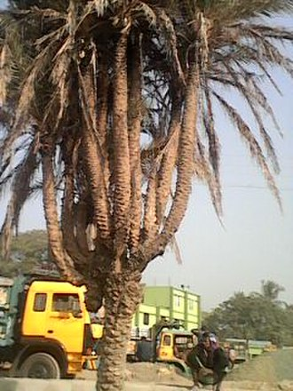 Satkhira District - Bhomra land Port