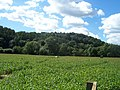 Bickleigh , The Maize Maze - geograph.org.uk - 1223845.jpg