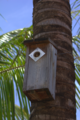 Bird house in brazil.png