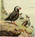 Bird lore (1913) (14748742022).jpg
