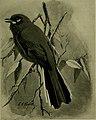 Bird lore (1914) (14753337294).jpg