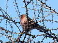 Birds14Slovakia6.JPG