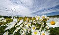 Blooms53 (9094631844).jpg