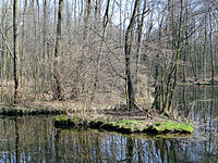 Blue Sources Nature Reserve in Tomaszow Mazowiecki - 38.jpg