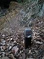Bonten fall Yamada-cho Kobe 梵天滝(チョンチョン滝)神戸市山田町 DSCF4968.jpg