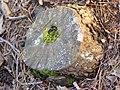Bosc de Can Deu el 2004 18.jpg