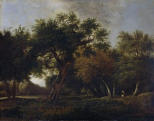 View of a Forest