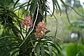 Botanical Garden Singapore 2017 (27474504599).jpg