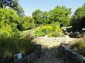 Botanischer Garten, Frankfurt am Main - DSC02515.JPG