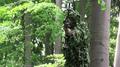 Bowhunter taking aim during a deer hunt Denmark 02.png