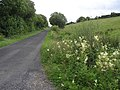 Bradan Road - geograph.org.uk - 1404817.jpg