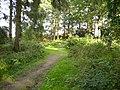 Bridleway track junction in Coneysthorpe Banks Wood - geograph.org.uk - 243631.jpg
