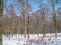 BuchenwaldStechlinsee030306.JPG