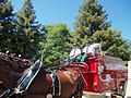 Budweiser Clydesdales in Simi Valley California - panoramio (1).jpg