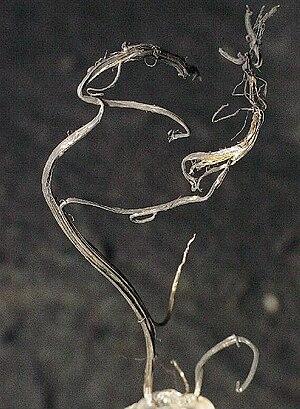Mineral County, Colorado - Native silver from the Bulldog Mountain Mine, Creede District. Size 4.5 x 2.6 x 0.25 cm.