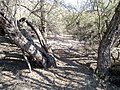 Butcher Jones Trail - Mt. Pinter Loop Trail, Saguaro Lake - panoramio (146).jpg
