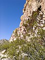 Butcher Jones Trail - Mt. Pinter Loop Trail, Saguaro Lake - panoramio (158).jpg