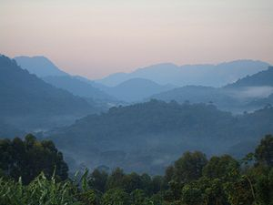 Bwindi Impenetrable National Park-112348.jpg