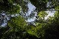 Bwindi Impenetrable National Park 09.jpg