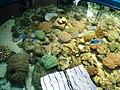 Cá biển Nha Trang trong bể 1.jpg
