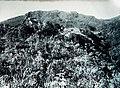 COLLECTIE TROPENMUSEUM De Gunung Gede Tjibodas TMnr 60016714.jpg