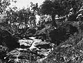 COLLECTIE TROPENMUSEUM Een boom die als rivierbrug dient op Anggoli Estate Sumatra TMnr 60021614.jpg