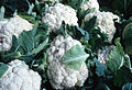 CSIRO ScienceImage 2814 Cauliflower.jpg