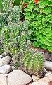 Cactus.photography.jpg